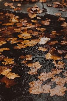 Gelbe herbstblätter im wasser auf einer überfluteten straße am bordstein