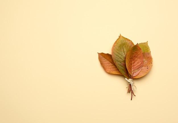Gelbe kirschblätter auf einem orange hintergrund
