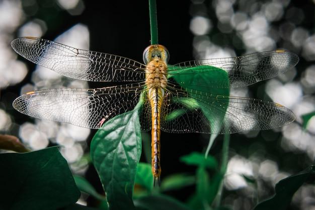 Gelbe libelle auf blatt