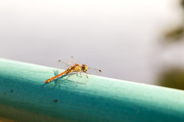 Gelbe libellennahaufnahme, die auf einem grünen rohr sitzt