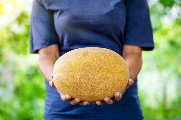 Gelbe melone in den ausgestreckten händen einer bäuerin