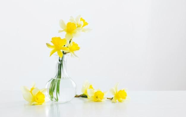 Gelbe narzisse in glasvase auf weißem hintergrund