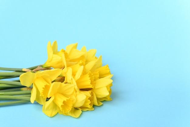 Gelbe narzissen auf blauem grund