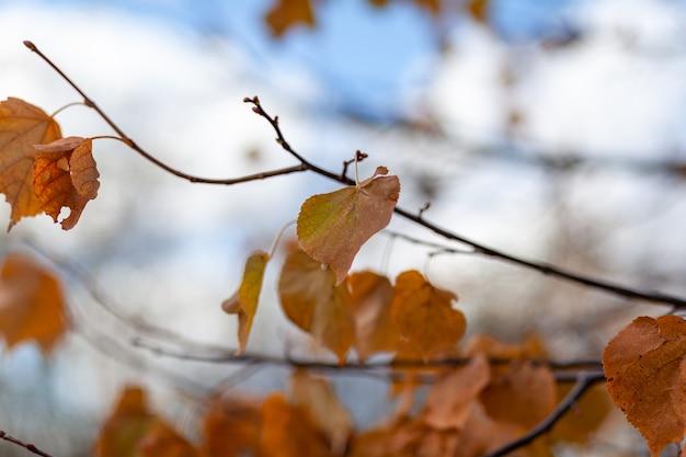 Gelbe oder trockene blätter an den ästen im herbst. blätter von birken, linden und anderen bäumen an den ästen. es gibt einen leeren platz für den text