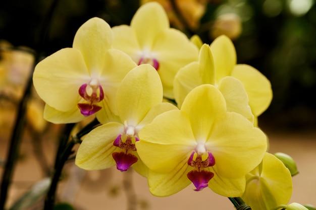 Gelbe orchidee in der farm