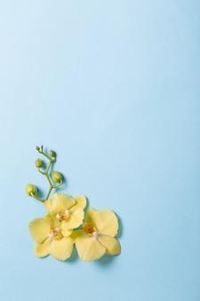 Gelbe orchideen auf blauem papier