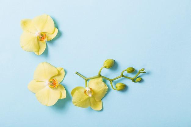 Gelbe orchideen auf blauem papierhintergrund