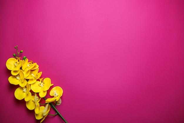 Gelbe orchideen auf rosa hintergrund mit kopienraum. valentinstagkarte auf rosa hintergrund.