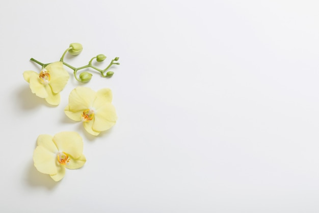 Gelbe orchideenblüten auf weißer oberfläche