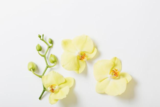 Gelbe orchideenblumen auf weißem hintergrund