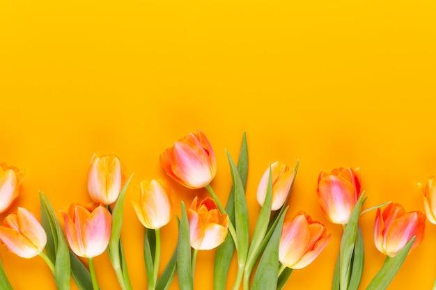 Gelbe pastellfarben färben tulpen auf gelb.