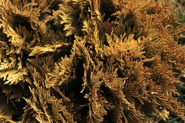 Gelbe pflanzen lebende blätter im winterhintergrund von pflanzen