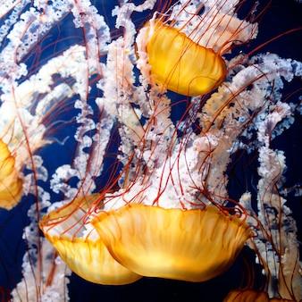Gelbe qualle mit blauem meerwasser