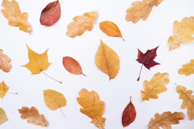 Gelbe rote ahornblattblätter auf weiß
