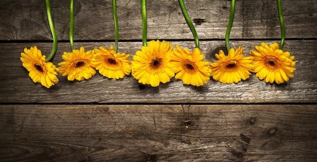 Gelbe schönheit blüte helle frühling