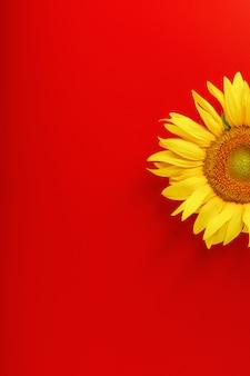 Gelbe sonnenblumenblume auf einem roten.