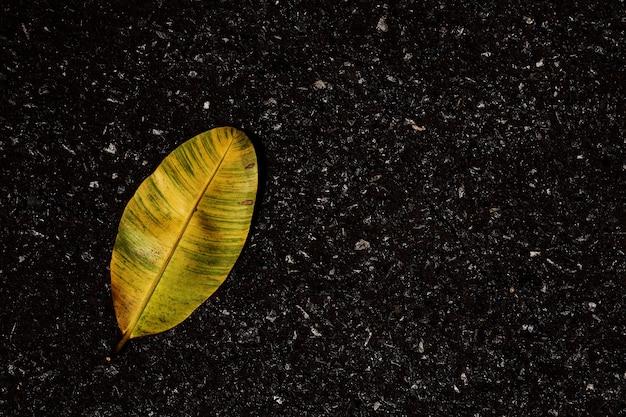 Gelbe trockene blätter auf dem asphaltboden - hintergrund