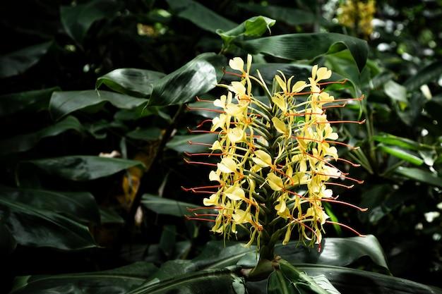 Gelbe tropische blume mit unscharfem hintergrund