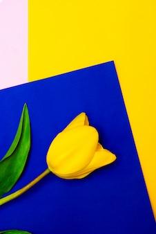 Gelbe tulpe auf gelbem und blauem hintergrund