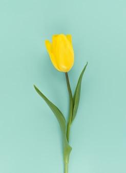 Gelbe tulpe auf grünem hintergrund. mimimalistisches flaches lag lagendes foto.