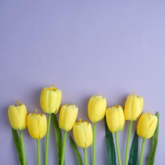Gelbe tulpen auf dem purpurroten hintergrund.