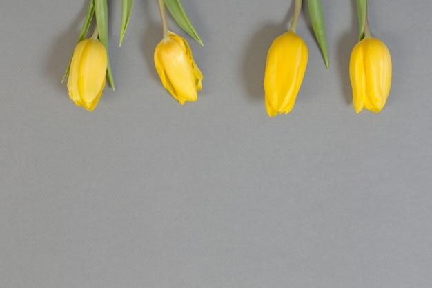 Gelbe tulpen auf grauer papieroberfläche