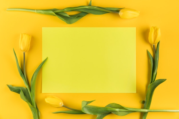 Gelbe tulpen auf leerem rahmen gegen gelben hintergrund umgeben