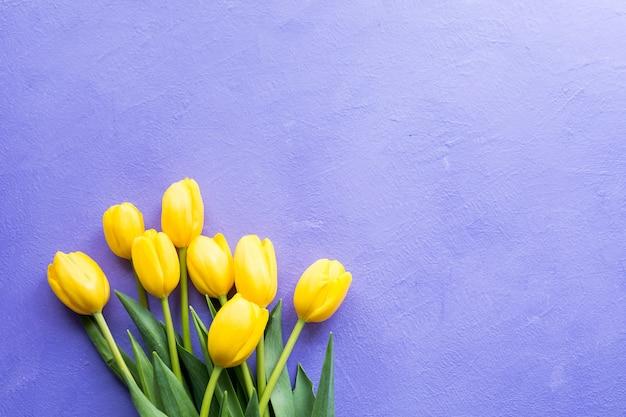 Gelbe tulpen auf lila violettem hintergrund.
