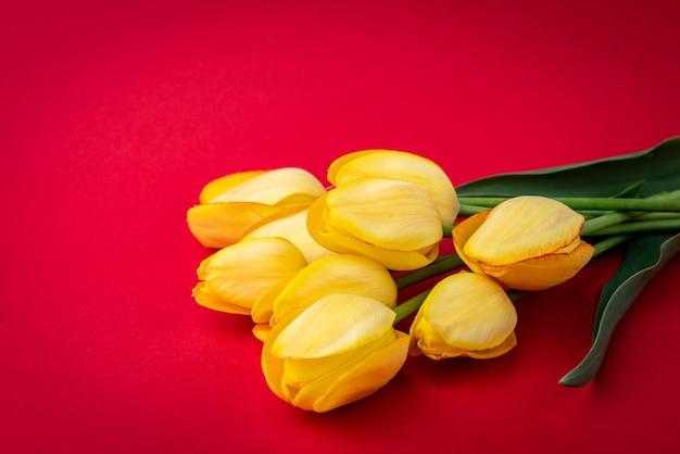 Gelbe tulpen auf rotem hintergrund.