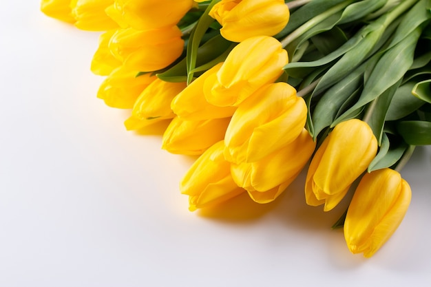 Gelbe tulpen, frühlingsblumen, isolieren auf weißem hintergrund