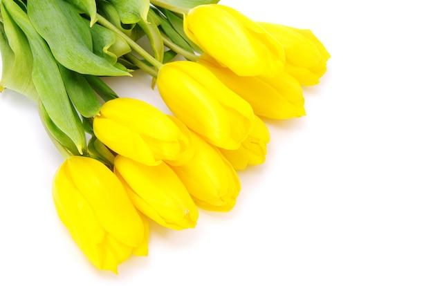 Gelbe tulpen isoliert auf weißem hintergrund