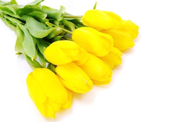 Gelbe tulpen lokalisiert auf weißem hintergrund