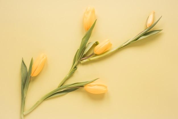 Gelbe tulpenblumen auf tabelle
