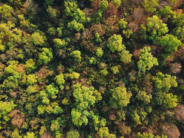 Gelbe und grüne blätter, sommer im tropenwald