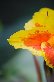 Gelbe und orange blume. makrodetail.