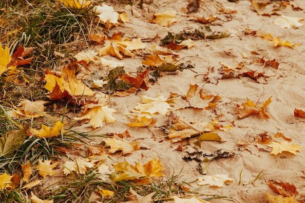 Gelbe und orange trockene gefallene blätter liegen auf dem sandherbsthintergrund.