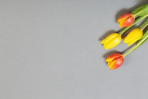 Gelbe und orangefarbene tulpen auf grauem hintergrund