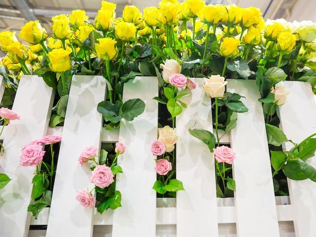 Gelbe und rosa rosen hinter dem zaun