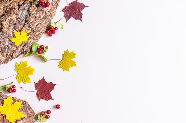 Gelbe und rote ahornblätter und baumrinde
