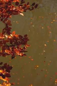 Gelbe und rote blätter des goldenen herbstherbstes auf dem hintergrund eines sees mit gefallenen blättern hintergrund mit kopienraum