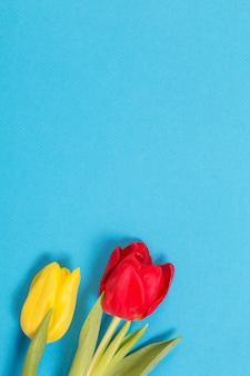 Gelbe und rote tulpen auf blauem hintergrund
