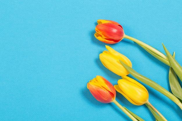 Gelbe und rote tulpen auf blauer oberfläche