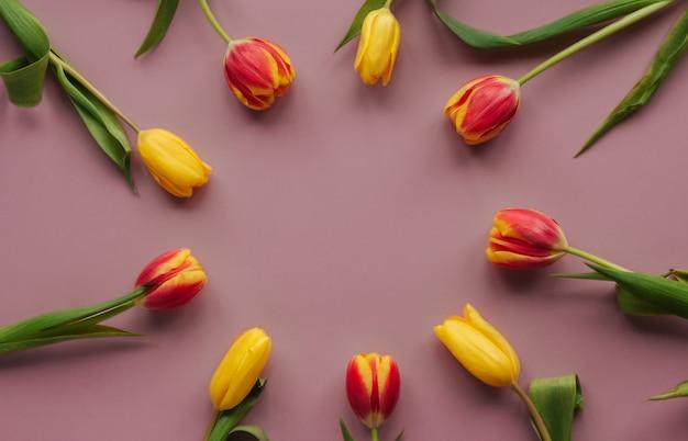 Gelbe und rote tulpen auf einem rosa isolierten hintergrundkopierraum. runder rahmen aus tulpen.
