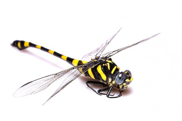 Gelbe und schwarze libelle auf der weißen szene