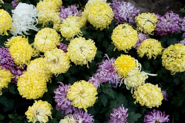 Gelbe und violette blüten