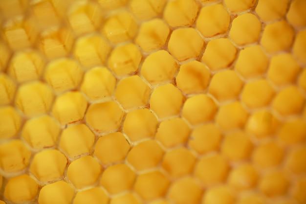 Gelbe versiegelte zellen am rahmen. honigrahmen mit reifem honig. kleiner holzrahmen mit waben voller akazienhonig.