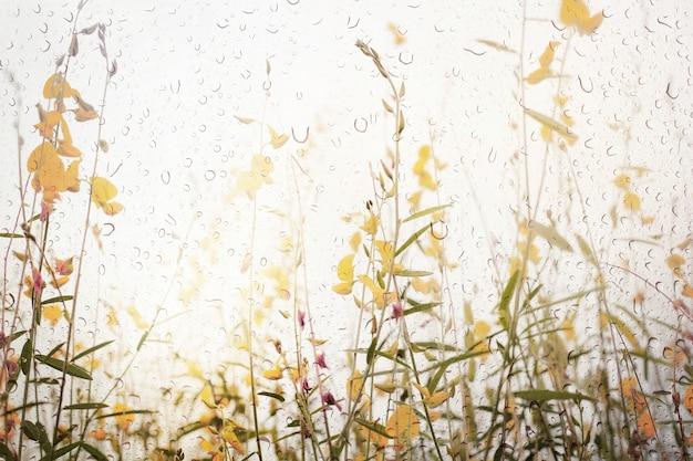 Gelbe wilde blume unter dem wind. blick durch das fenster des starken regnerischen tages.