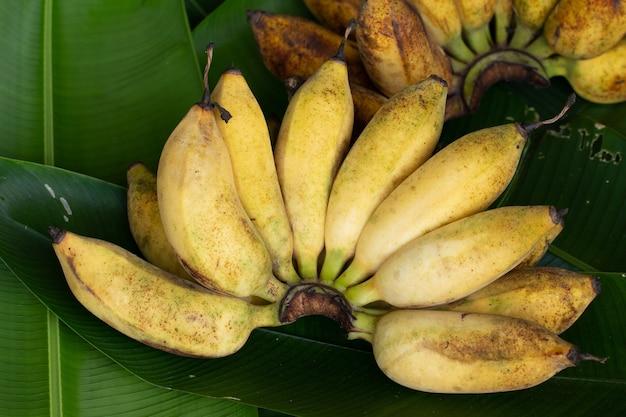 Gelber bananenzweig mit grünem blatthintergrund
