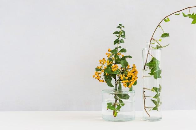 Gelber beerenzweig und efeu im glasvase auf schreibtisch gegen hintergrund