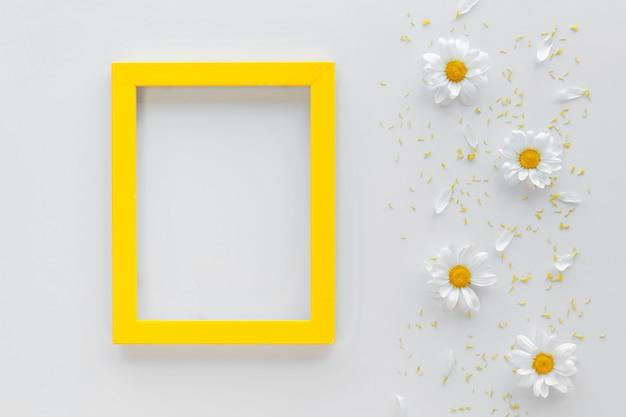 Gelber bilderrahmen mit blume und blütenstaub des weißen gänseblümchens auf weißer oberfläche